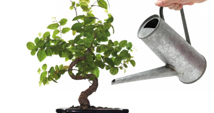 Softplant GmbH Dienstleistugnen